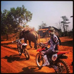 elephant on the riding trail