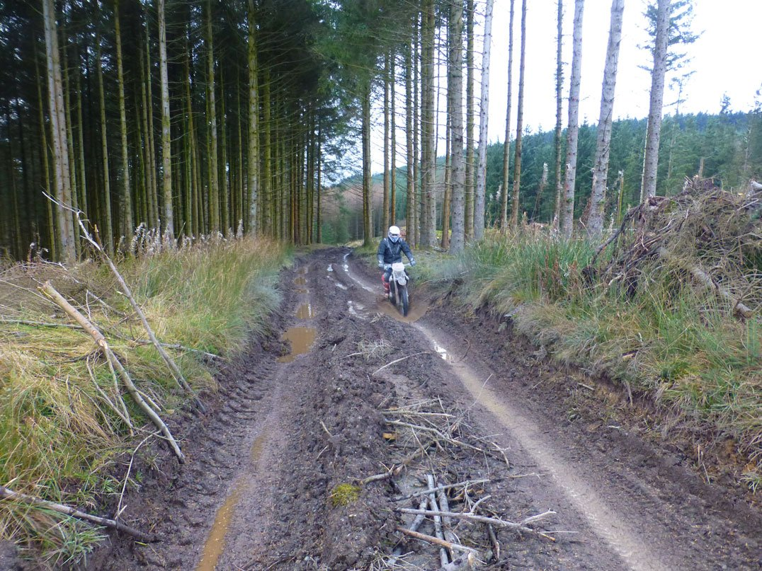 Welsh forests and dirt bikes go together